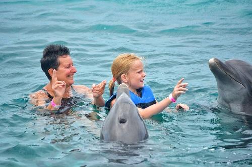 les dauphins sur la Côte d'Azur
